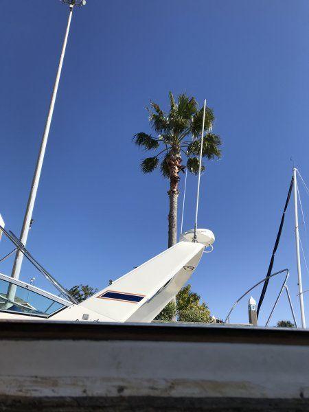 Daytime Palm.JPG